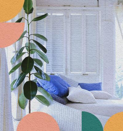 ¡Refresca tu vivienda con plantas ornamentales!